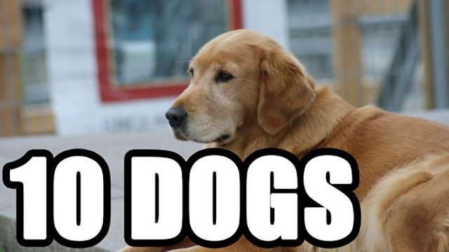 10 Dogs