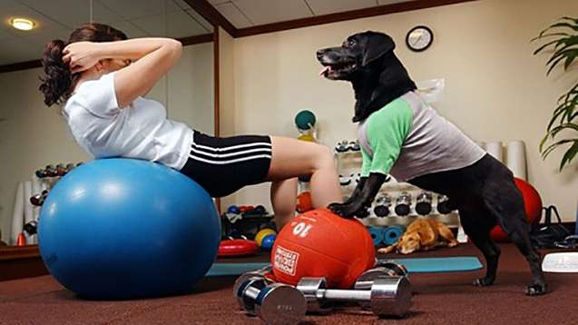 Workout Dog Yoga Ball